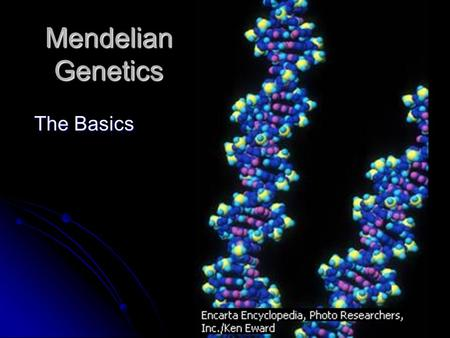 Mendelian Genetics The Basics. Gregor Mendel??? Known as the Father of Genetics: His experiments with Pea plants from 1856-1863 began our understanding.