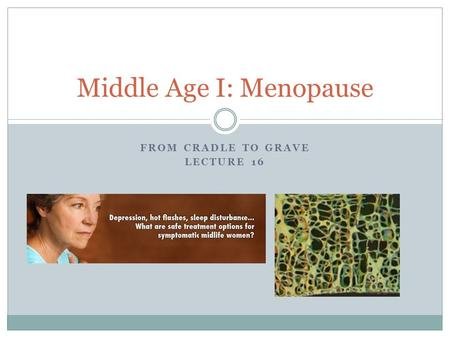 FROM CRADLE TO GRAVE LECTURE 16 Middle Age I: Menopause.