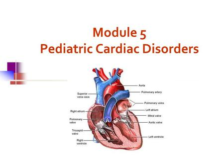 Module 5 Pediatric Cardiac Disorders. Fetal Circulation Main Blood Flow Placenta  Umbilical Vein  Liver  Ductus Venosus  Inferior Vena Cava Vena Cava.