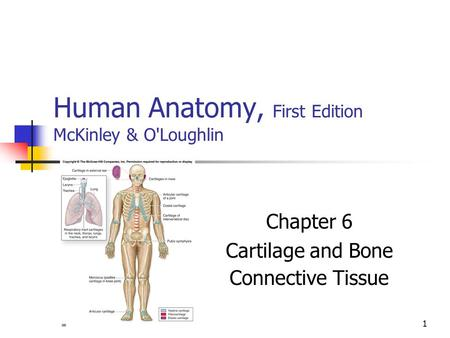 Human anatomy by mckinley
