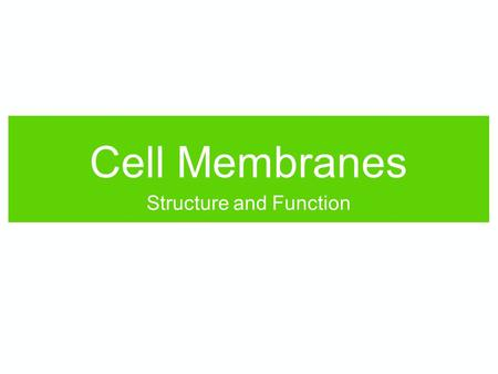Cell Membranes Structure and Function. As a review, fill in the blanks: Molecules are made up of ___. Sugars link together to make ___. Amino acids link.