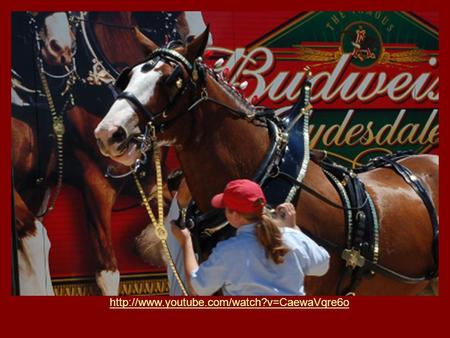 Budweiser Factory Improving the Process Jennifer Kakacek Nikole Ellison Jessica Wood.