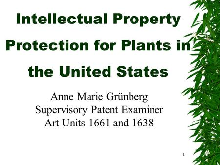 1 Intellectual Property Protection for Plants in the United States Anne Marie Grünberg Supervisory Patent Examiner Art Units 1661 and 1638.
