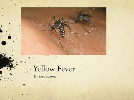 Yellow Fever By joey Rosen. What is yellow Fever? Yellow fever is a virus that affects the liver and kidneys, this causes fever and jaundice ( a medical.