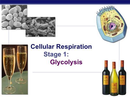 AP Biology 2007-2008 Cellular Respiration Stage 1: Glycolysis.