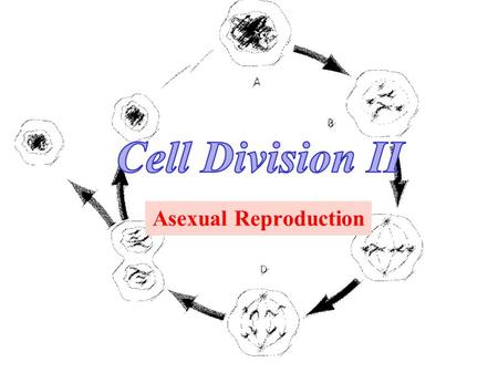 Asexual Reproduction. S1-1-01 Illustrate and explain the process of mitotic cell division in plants and animals. Vocabulary & People InterphaseMitosisIPMAT.
