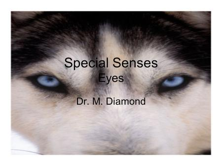 Special Senses Eyes Dr. M. Diamond. The Eye and Vision 70% of all sensory receptors are in the eyes Each eye has over a million nerve fibers Protection.
