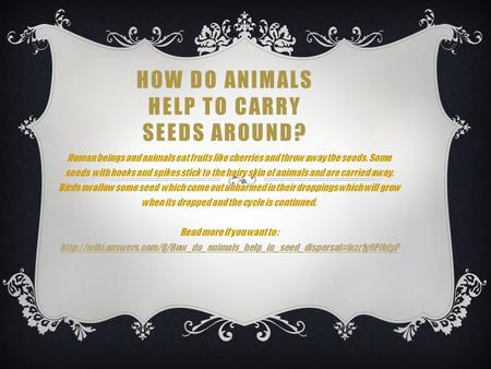 HOW DO ANIMALS HELP TO CARRY SEEDS AROUND? Human beings and animals eat fruits like cherries and throw away the seeds. Some seeds with hooks and spikes.