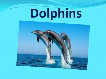 Dolphins. Dolphins live in seas and oceans. They are not afraid of the human and help us to be saved from sharks. They are very funny, clever and friendly.
