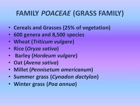 FAMILY POACEAE (GRASS FAMILY) Cereals and Grasses (25% of vegetation) 600 genera and 8,500 species Wheat (Triticum vulgare) Rice (Oryza sativa) Barley.