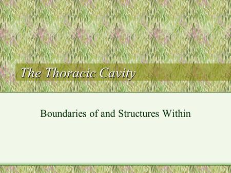 The Thoracic Cavity Boundaries of and Structures Within.