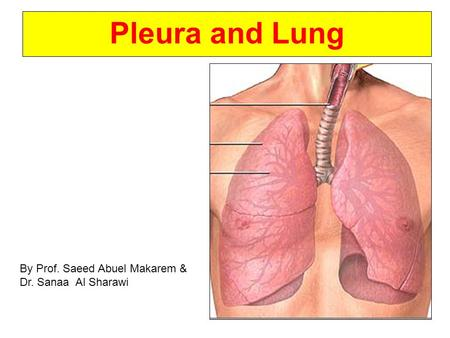 Pleura and Lung By Prof. Saeed Abuel Makarem & Dr. Sanaa Al Sharawi.