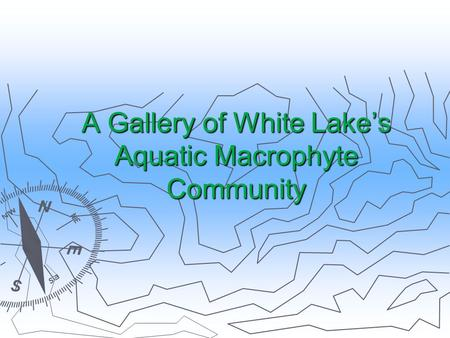A Gallery of White Lake's Aquatic Macrophyte Community.