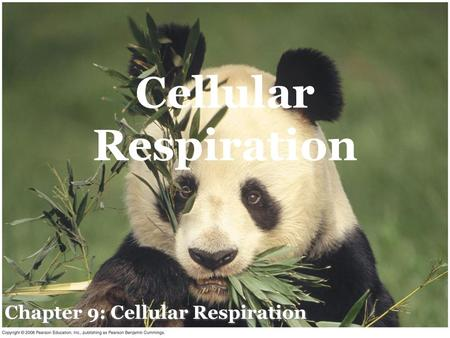 Chapter 9: Cellular Respiration