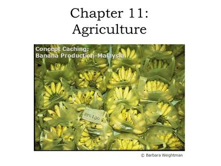 Chapter 11: Agriculture Concept Caching: Banana Production-Malaysia