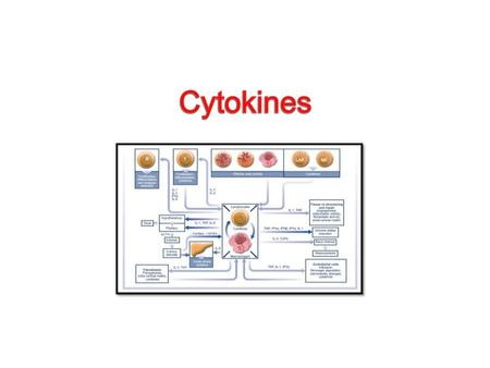CYTOKINES  Definition: Cytokines are a diverse group of non-antibody proteins that act as mediators between cells. ( they are chemical molecules). They.