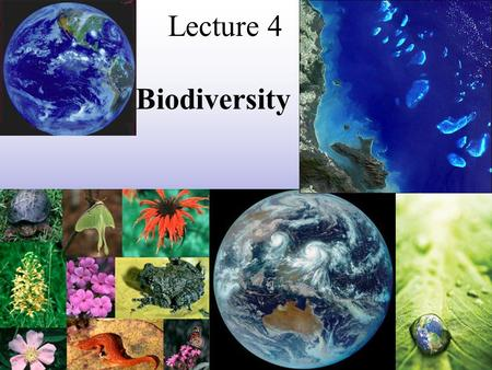 Lecture 4 Biodiversity. Biodiversity -also called biological diversity -consists of the forms of life that can best survive Earth's conditions -includes.