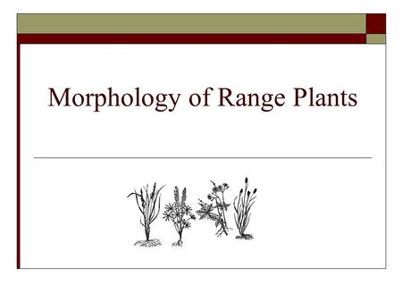 Morphology of Range Plants. Plant Morphology  Describes the physical form and external structures of a plant.