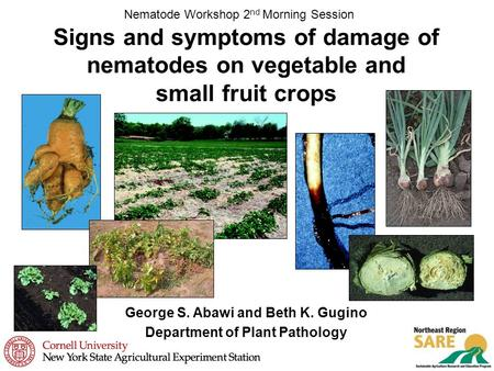 Signs and symptoms of damage of nematodes on vegetable and small fruit crops Nematode Workshop 2 nd Morning Session George S. Abawi and Beth K. Gugino.
