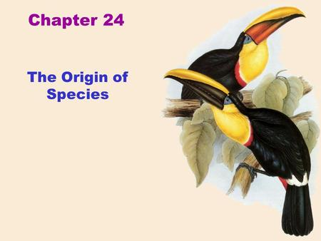 Chapter 24 The Origin of Species. Hummingbirds of Costa Rica Species.
