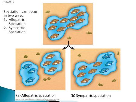 Speciation can occur in two ways: Allopatric Speciation