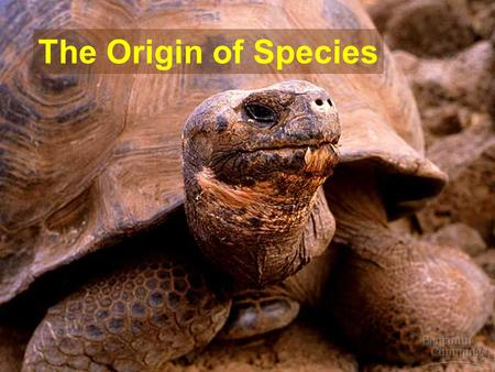 The Origin of Species. understanding speciation video  ding-Speciation-150610251 ???http://www.5min.com/Video/Understan.