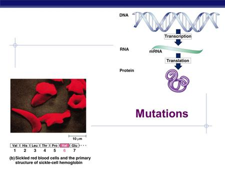 AP Biology Mutations AP Biology When do mutations affect the next generation? Mutations Point mutations  single base change  base-pair substitution.