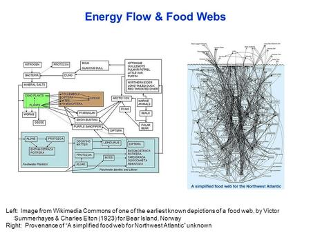 Energy Flow & Food Webs Left: Image from Wikimedia Commons of one of the earliest known depictions of a food web, by Victor Summerhayes & Charles Elton.