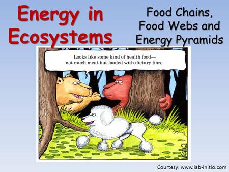 Energy in Ecosystems Food Chains, Food Webs and Energy Pyramids Courtesy: www.lab-initio.com.