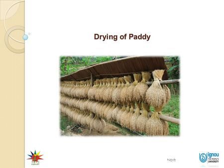 Drying of Paddy Next. Importance of drying Drying of Paddy Next End At harvest time rice grain contains a lot of moisture (20-25%). High moisture promotes.
