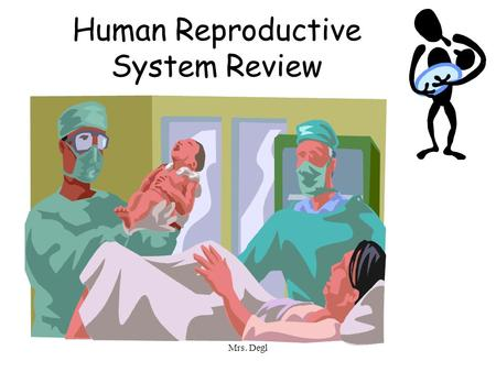 Mrs. Degl Human Reproductive System Review. Mrs. Degl Male Reproductive System.