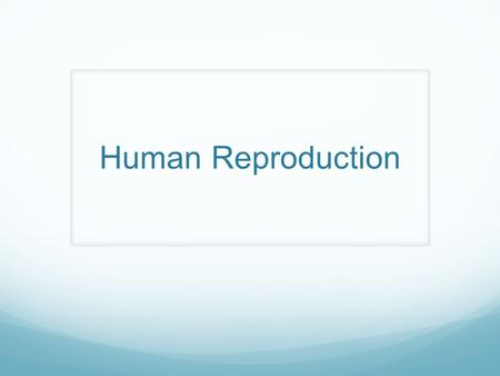 Human Reproduction. Male Reproductive Structures.
