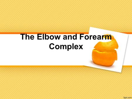 The Elbow and Forearm Complex. Joints of the Elbow and Forearm.