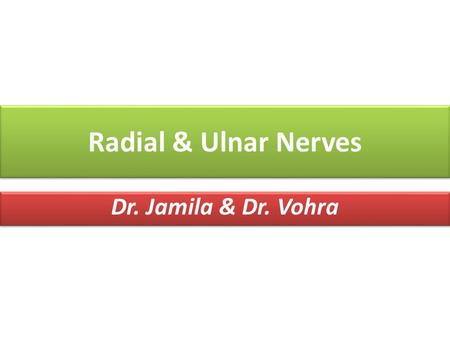 Radial & Ulnar Nerves Dr. Jamila & Dr. Vohra. At the end of the lecture, students should be able to: At the end of the lecture, students should be able.