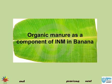 Organic manure as a component of INM in Banana. Introduction Organic manure as a component of INM in Banana The use of chemical fertilizer is increasing.