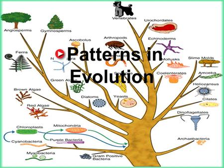11.6 Patterns in Evolution Patterns in Evolution.