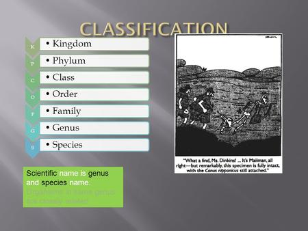 CLASSIFICATION Kingdom Phylum Class Order Family Genus Species
