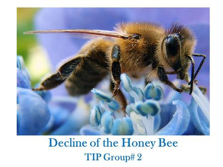 Decline of the Honey Bee TIP Group# 2