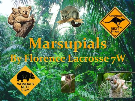Marsupials By Florence Lacrosse 7W.