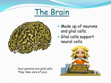 The Brain Made up of neurons and glial cells. Glial cells support neural cells. Your parents are glial cells. They take care of you!