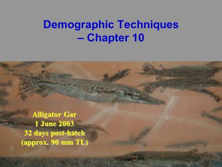 Demographic Techniques – Chapter 10 Alligator Gar 1 June 2003 32 days post-hatch (approx. 90 mm TL)
