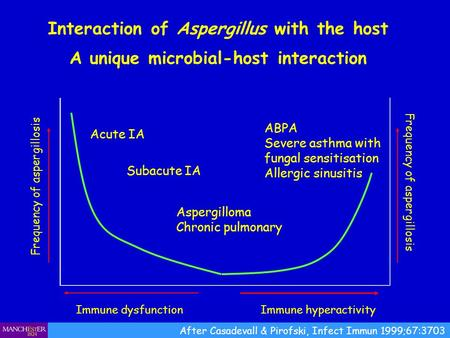 Interaction of Aspergillus with the host A unique microbial-host interaction Immune dysfunction Frequency of aspergillosis Immune hyperactivity Frequency.