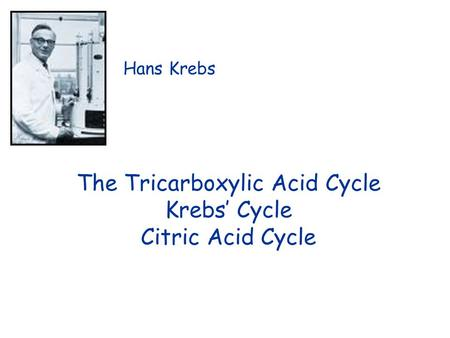 The Tricarboxylic Acid Cycle Krebs' Cycle Citric Acid Cycle Hans Krebs.