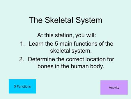 The Skeletal System At this station, you will: 1.Learn the 5 main functions of the skeletal system. 2.Determine the correct location for bones in the human.