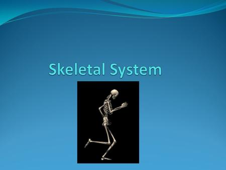 Skeleton System The skeletal system is broken into 2 categories Axial Skull Ribs Sternum Vertebral column Appendicular Upper extremity Lower extremity.