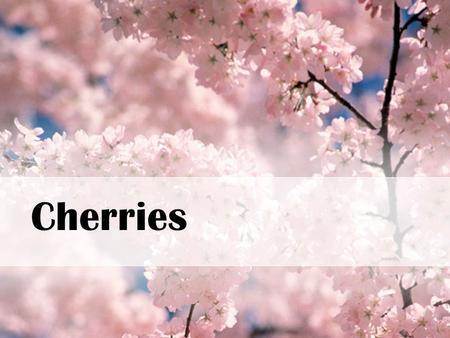Cherries. Cherry Facts WI ranks #4 Cherries grow on trees There are cherry orchards Takes 4-5 years before a tree can produce enough cherries for harvest.