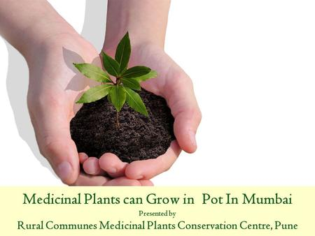 Medicinal Plants can Grow in Pot In Mumbai Presented by Rural Communes Medicinal Plants Conservation Centre, Pune.
