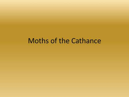 Moths of the Cathance. Maine Forestry Service CREA is a participant in a Maine Forestry Service study of invasive moth species. All species in this.