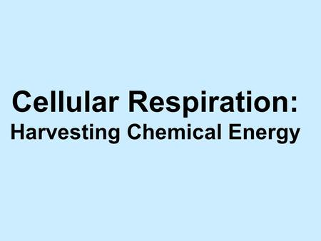Cellular Respiration: Harvesting Chemical Energy.