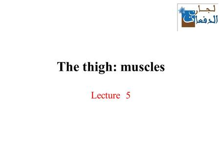 The thigh: muscles Lecture 5. Compartments of the thigh The deep fascia of the thigh - fascia lata – covers all muscles around and arranges them into.